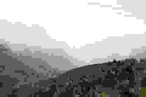 Ngăn chặn kịp thời vụ cháy rừng lớn đe dọa Vườn quốc gia Hoàng Liên