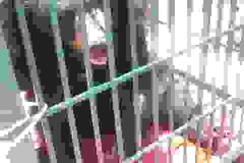 Một người dân hiến tặng Vườn Hoàng Liên con gấu ngựa hơn 10 tuổi
