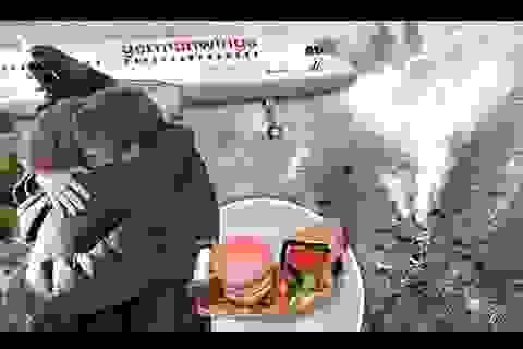 Germanwings có thể bị kiện vì để cơ phó một mình trong buồng lái