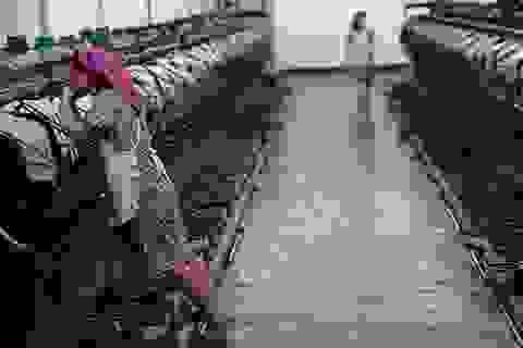 Công sở Triều Tiên được yêu cầu làm việc từ 5h sáng để tránh nóng