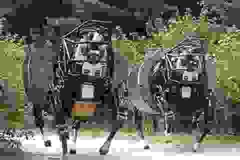 Chế tạo robot chó có thể đi theo chủ nhân 20 dặm