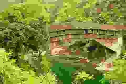 Vẻ đẹp cổ kính của cây cầu gỗ 1000 năm tuổi