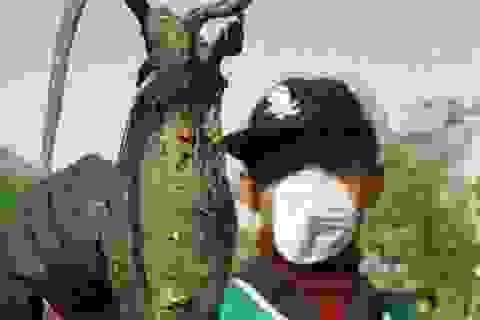 Chuột đột biến khổng lồ tấn công thủ đô Iran