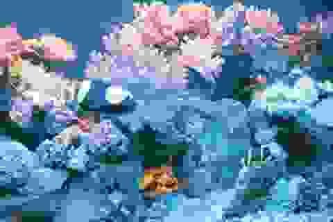 Mực nước biển dâng đe dọa đa dạng sinh học ở Thái Bình Dương