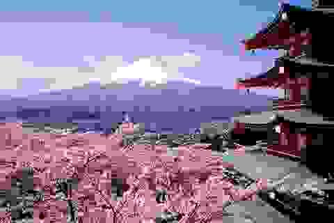 Tháng 4 và Lễ hội Mùa Xuân Việt - Nhật