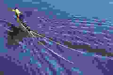 Chiêm ngưỡng loài phù du 'truy hoan' trên sông