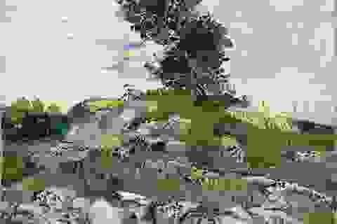 """""""Soi"""" cận cảnh từng nét cọ của Van Gogh"""