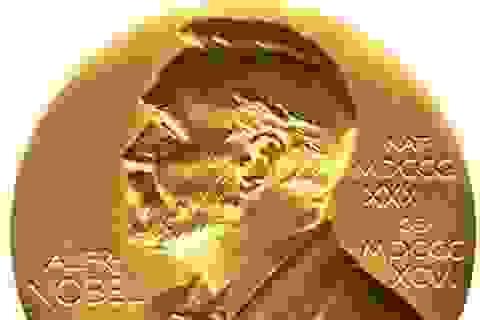 Khám phá trong lĩnh vực nào dễ được giải Nobel Y sinh?