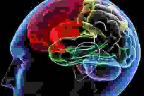 Những cú lừa ngoạn mục của não bộ