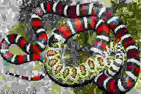 7 câu chuyện thú vị về loài rắn