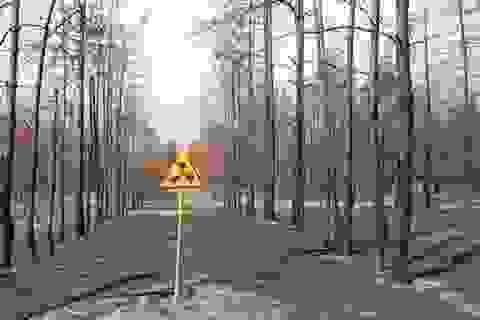 Chernobyl: Rừng cây chết kỳ lạ 30 năm không phân hủy