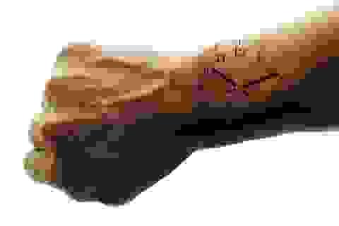 Tìm ra cơ chế thiết lập lại đồng hồ sinh học?