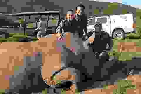 Ca sỹ Thu Minh lên báo nước ngoài vì... bảo vệ tê giác