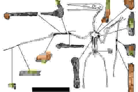 Hóa thạch thằn lằn bay lâu đời nhất được phát hiện