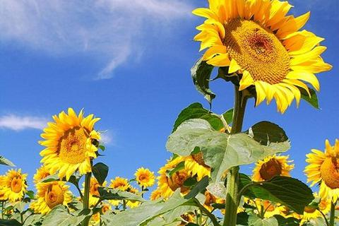 Liệu thực vật có cảm nhận từ trường Trái đất?