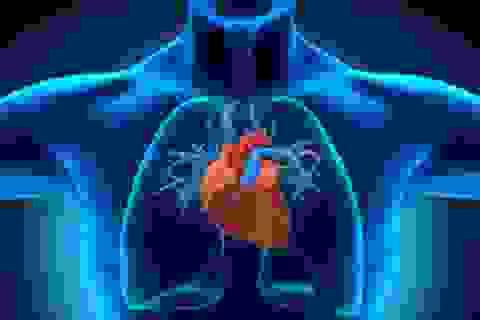 Cấy ghép cơ quan động vật vào cơ thể người