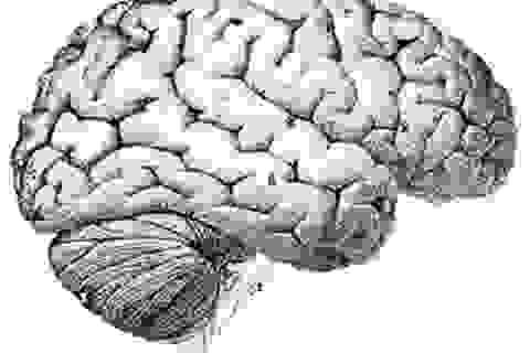 Làm cách nào não có thể xóa được ký ức cũ