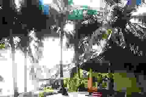 """Mát mắt những hàng dừa xanh trên """"đảo ngọc"""" Phú Quốc"""