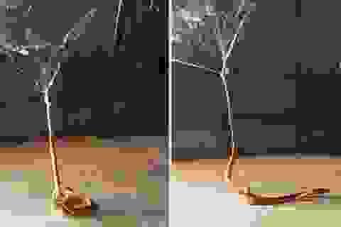 """Rùng mình khoảnh khắc rắn độc bị nhện độc """"giăng bẫy"""""""