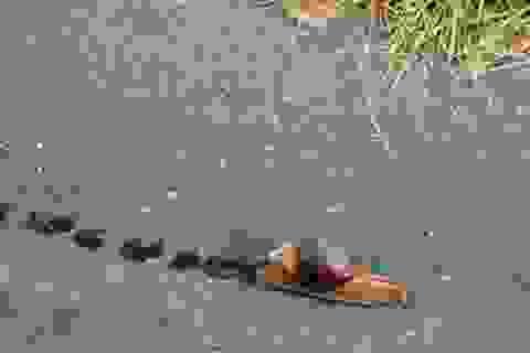 Gặp tai nạn trên đường cao tốc vì... chất nhờn của ốc sên
