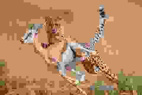 Cận cảnh bước chạy thần tốc của loài động vật nhanh nhất thế giới