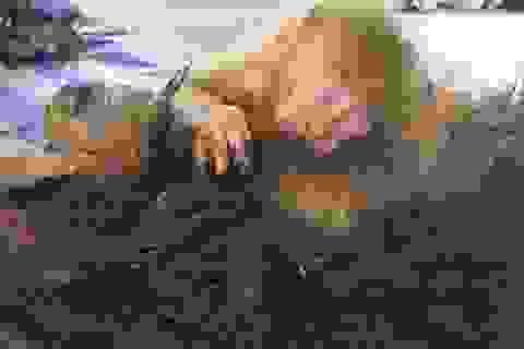 Hình ảnh khỉ con ôm chặt xác mẹ khiến nhiều người cảm động