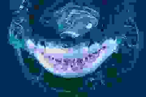 """Cận cảnh """"nụ cười"""" đáng sợ của sát thủ đại dương cá mập trắng"""