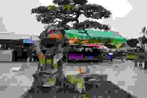 """Ngắm những cây bonsai dáng """"siêu độc"""" có giá tiền triệu"""