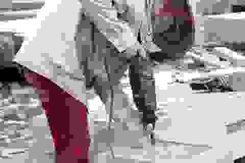 Về Ninh Bình xem phụ nữ làm nghề đá mỹ nghệ