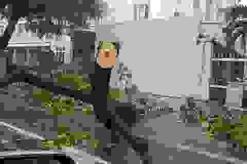 Vì sao bão nhỏ mà cây xanh Đà Nẵng vẫn đổ la liệt?