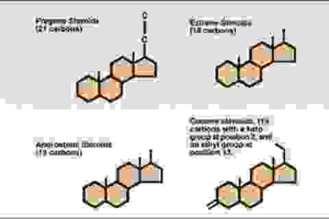 Estrogen - Thuốc ngừa thai và những liên lụy
