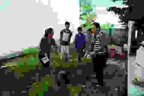 Đà Nẵng: Sốt xuất huyết tăng gấp 5 lần so với năm ngoái