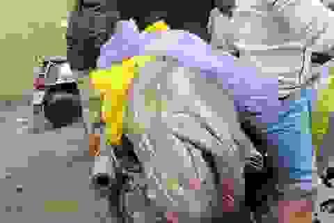 """Ngư dân Đà Nẵng bắt được cá mú """"khủng"""" 70kg"""