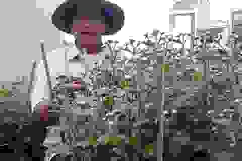 Đà Nẵng: Làng hoa hối hả vào vụ Tết