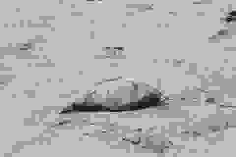 Đà Nẵng xét nghiệm mẫu nước vùng biển xuất hiện cá chết