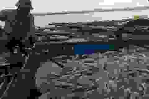 Hơn 60 tấn thủy hải sản lồng bè chết trắng  chỉ sau 1  đêm