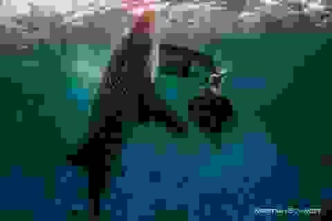 Ngắm bộ ảnh thời trang tuyệt đẹp chụp dưới đáy biển