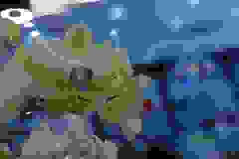 Video: Thử nghiệm tính năng xoá phông ảnh trên Xperia T2 Ultra