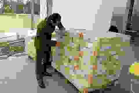 26.000 tấn thịt trâu nhập khẩu đã đi đâu?