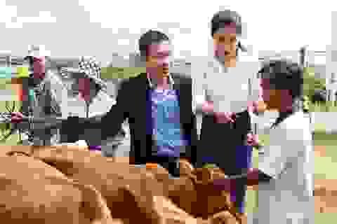 FrieslandCampina Việt Nam tặng bò cho nông dân tỉnh Long An