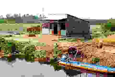 Hạn, mặn gây thiệt hại trên 230 tỷ đồng