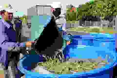Việt Nam bán cao nhất trong 6 nước xuất khẩu tôm lớn nhất thế giới