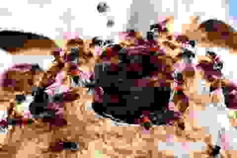 Bị ong chích hơn 150 mũi, một bệnh nhi thoát chết nhờ lọc máu