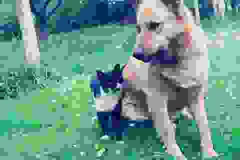 """Đến vùng đất chó và mèo được coi như """"công dân thực thụ"""""""