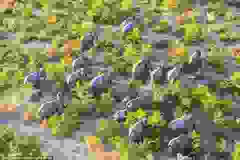 Cảnh đẹp mê hồn của thế giới động vật hoang dã nhìn từ trên cao