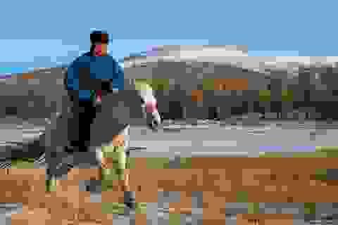 Trải nghiệm nhịp sống bình yên nơi thảo nguyên Mông Cổ