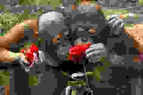"""Ngộ nghĩnh khoảnh khắc động vật """"dịu dàng"""" bên những cánh hoa"""