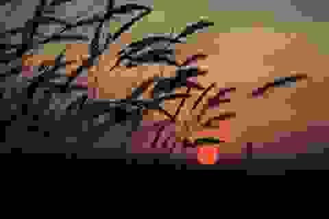 Vẻ đẹp huyền diệu của đất trời dưới ánh hoàng hôn