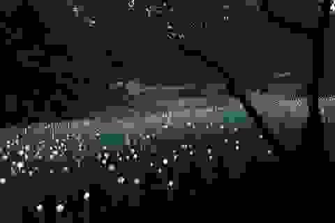 """Cánh đồng """"hoa bóng đèn"""" đẹp như chốn thần tiên"""