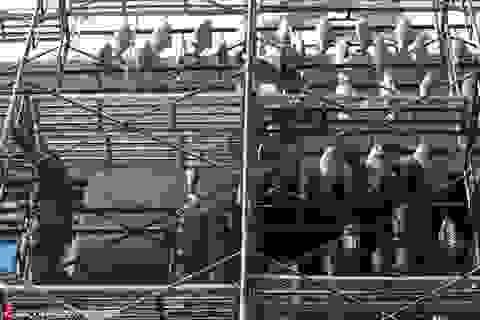 Nhà hàng treo 50.000 con cá trước cửa để hút khách